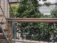 惠城区桥东东坡亭附近二房一厅