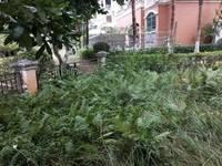 一中旁惠南学校对面 东江学府一期 一楼送花园