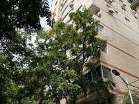 滨江苑旁电梯房自住投资 房子朝南 通风采光好,精装修 带重点十一小学和九中双学位