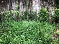 红花湖5A景区旁 天然氧气别墅区-万林湖247平 超级大花园 实用高 随时可以看