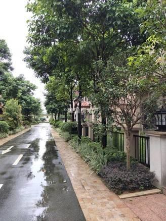 中信凯旋城三期 豪华别墅 多套,赠达大花园和车库,有匙直接看