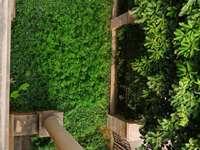 金山湖旁 德威朗琴湾联排边位别墅出售,带双车位,花园中间,前后花园