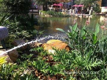 园林水池实景