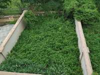 雅居乐白鹭湖别墅!双拼户型!送200m花园!超大地下室!改动性大!