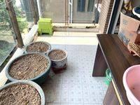 朝南 精装1房1厅 双阳台 可改2房 中心地段 TCL雅园