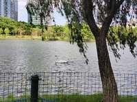 城市花园一期三房出售,一级物业管理小区,靠湖边户型格局靓小孩入读惠州一小113万