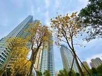金山湖中心,惠州未来新名片,最具升值潜力的核心片区,交通便利,生活配套齐全